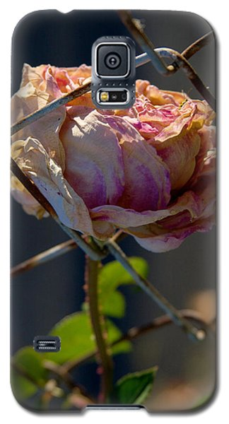 Galaxy S5 Case featuring the photograph Can't Fence Me In - Faded Rose Art Print by Jane Eleanor Nicholas