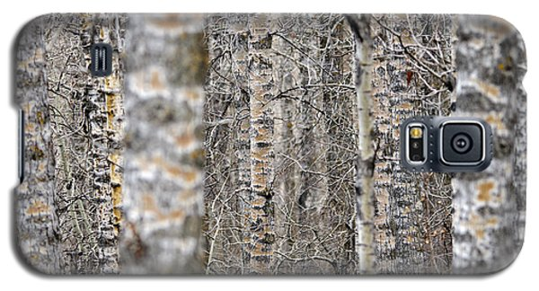 Can't See The Wood For The Trees Galaxy S5 Case by Dee Cresswell