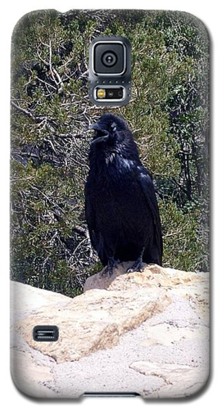 Galaxy S5 Case featuring the photograph Canyon Raven by Philomena Zito