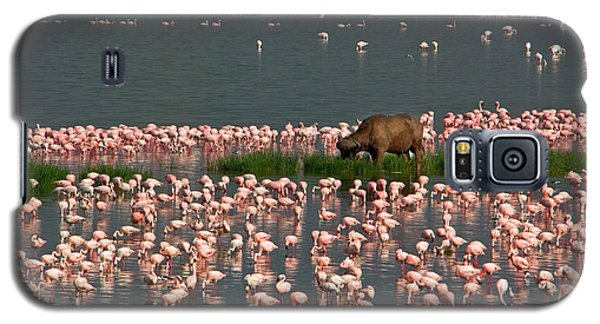 Cape Buffalo And Lesser Flamingos Galaxy S5 Case by Panoramic Images