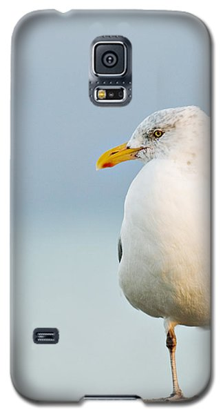 Cape Cod Seagull Galaxy S5 Case
