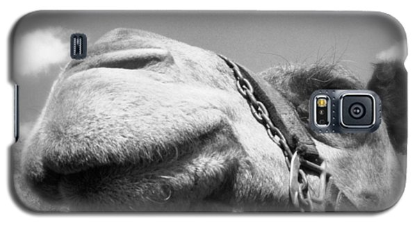 Captivating Camel Galaxy S5 Case