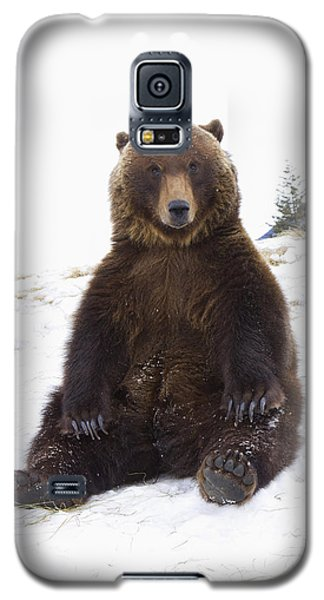 Captive Grizzly During Winter Sits Galaxy S5 Case by Doug Lindstrand