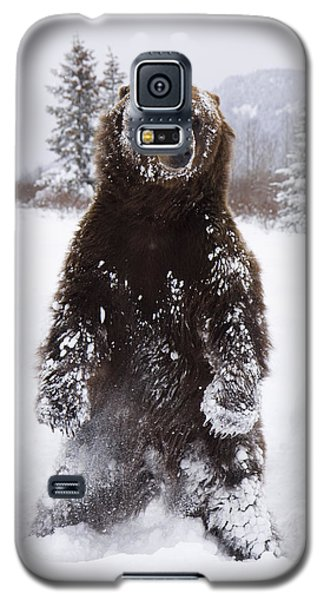 Captive Grizzly Stands On Hind Feet Galaxy S5 Case