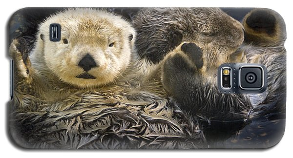 Otter Galaxy S5 Case - Captive Two Sea Otters Holding Paws At by Tom Soucek