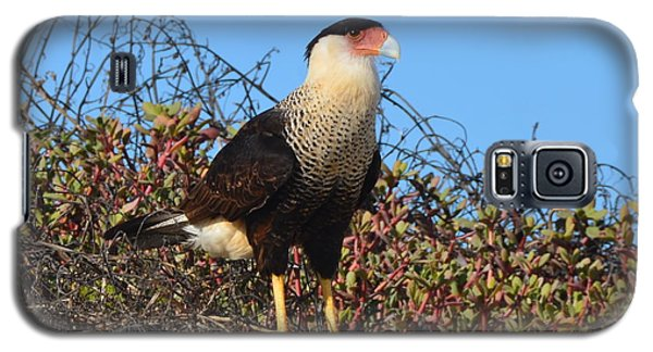 Galaxy S5 Case featuring the photograph Caracara In The Dunes by Debra Martz