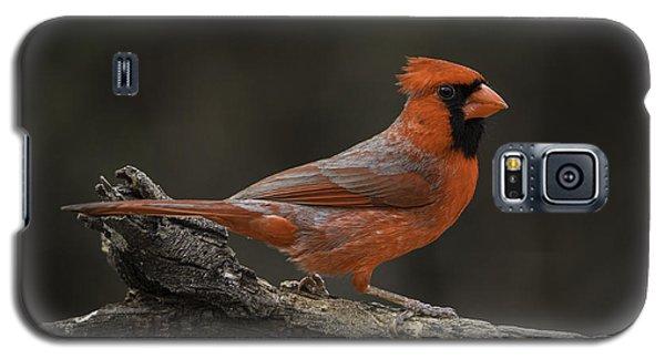 Cardinal 2011-1 Galaxy S5 Case