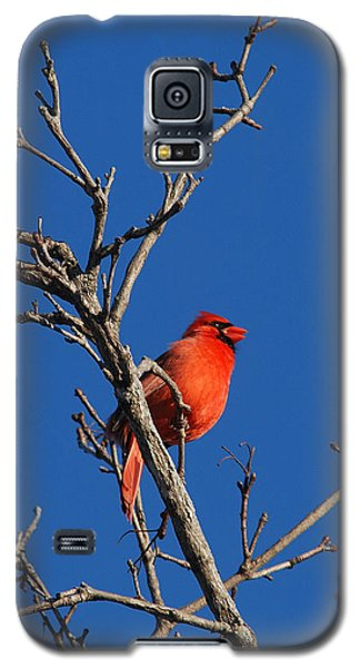 Cardinal And Blue Galaxy S5 Case