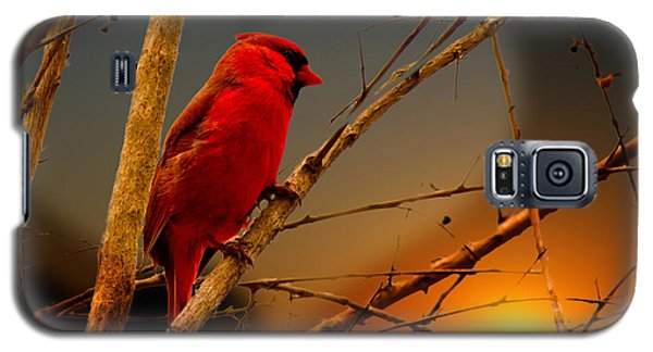Cardinal At Sunset Valentine Galaxy S5 Case