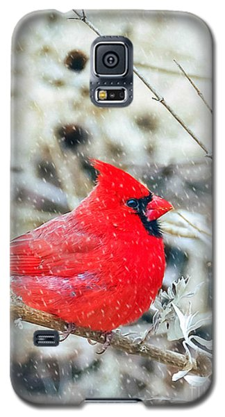 Cardinal Bird Christmas Card Galaxy S5 Case
