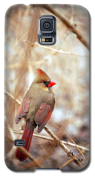 Galaxy S5 Case featuring the photograph Cardinal Birds Female by Peggy Franz