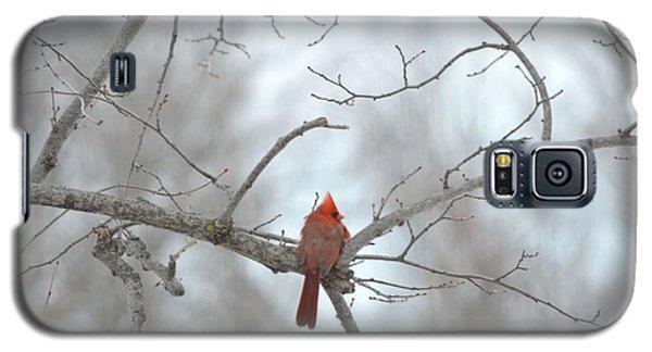Galaxy S5 Case featuring the photograph Cardinal Delight by Dacia Doroff