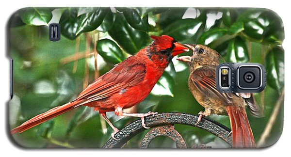 Cardinal Gift Of Love Photo Galaxy S5 Case by Luana K Perez