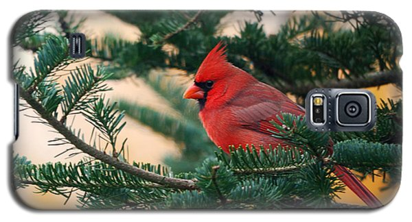 Cardinal In Balsam Galaxy S5 Case by Susan Capuano