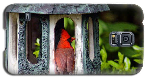 Cardinal In Bird Feeder Galaxy S5 Case