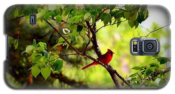 Cardinal In Dogwood Galaxy S5 Case