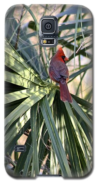 Galaxy S5 Case featuring the photograph Cardinal In Palmetto Tree by Jeanne Kay Juhos
