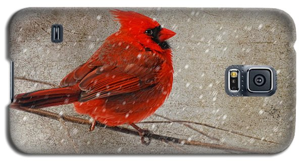 Cardinal In Snow Galaxy S5 Case by Lois Bryan