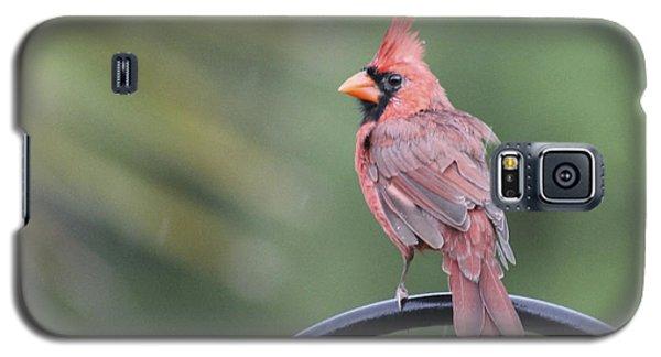 Cardinal In The Rain Galaxy S5 Case by Jeanne Kay Juhos
