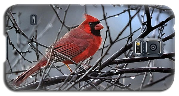 Cardinal In The Rain   Galaxy S5 Case by Nava Thompson