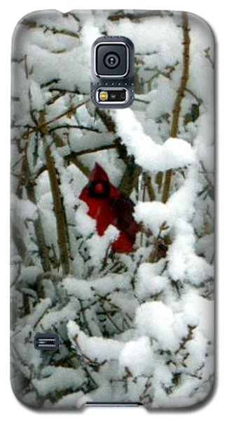 Galaxy S5 Case featuring the photograph Cardinal In The Snow by Cathy Shiflett