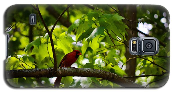 Cardinal In The Trees Galaxy S5 Case