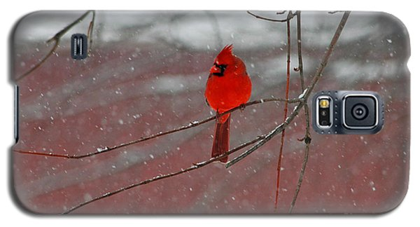 Galaxy S5 Case featuring the photograph Cardinal In Winter by Olivia Hardwicke