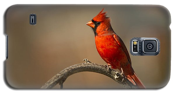 Galaxy S5 Case featuring the photograph Cardinal by Jerry Gammon