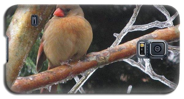 Cardinal Galaxy S5 Case by Marilyn Zalatan