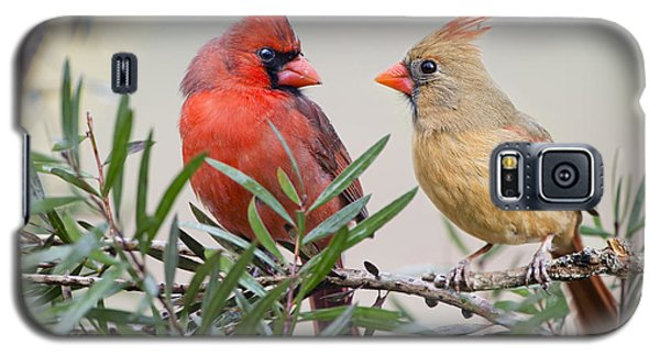 Cardinal Mates Galaxy S5 Case