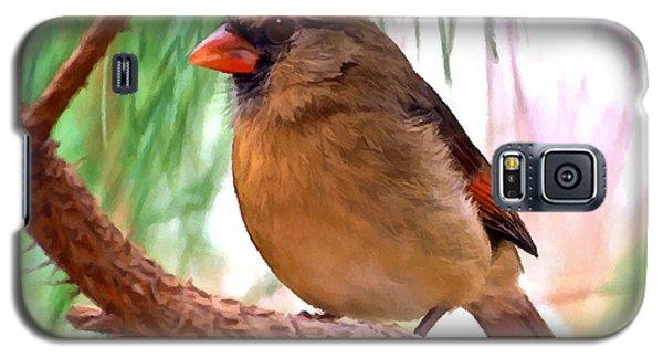 Cardinal Galaxy S5 Case by Bob and Nadine Johnston