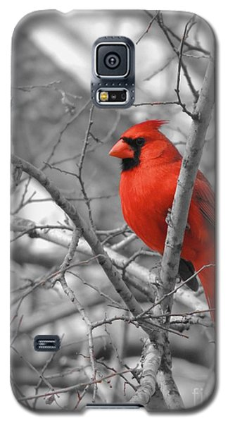 Cardinal Of Hope 002sc Galaxy S5 Case