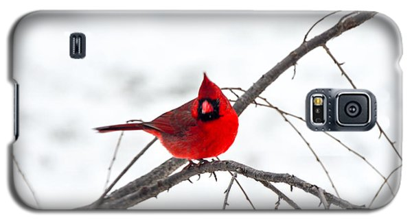 Cardinal On A Branch  Galaxy S5 Case by Mary Carol Story