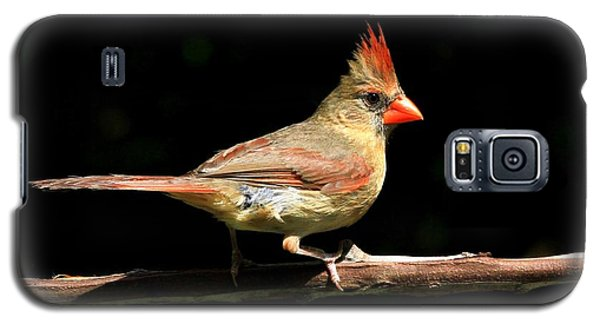Cardinal On Black Galaxy S5 Case