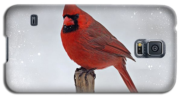 Cardinal Perching Galaxy S5 Case