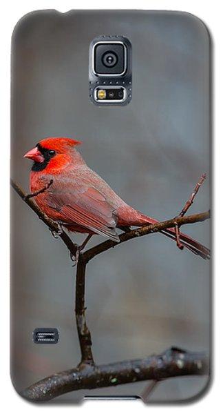 Cardinal Sing Galaxy S5 Case