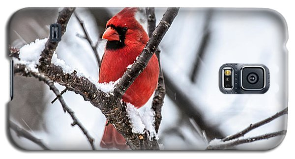 Cardinal Snow Scene Galaxy S5 Case
