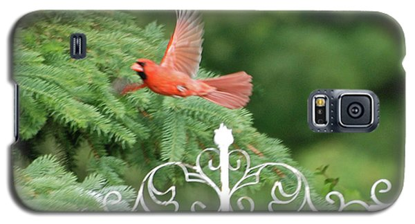Galaxy S5 Case featuring the photograph Cardinal Time To Soar by Thomas Woolworth