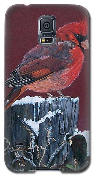 Cardinal Winter Songbird Galaxy S5 Case by Sharon Duguay