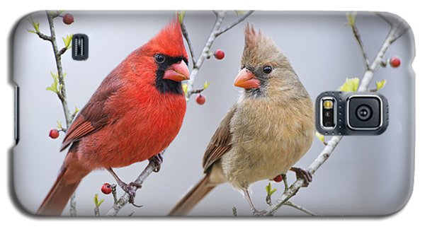 Cardinals In Early Spring Galaxy S5 Case