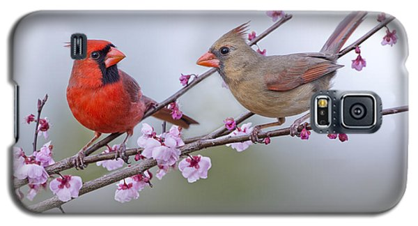 Cardinals In Plum Blossoms Galaxy S5 Case