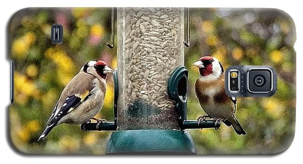Carduelis Carduelis 'goldfinch' Galaxy S5 Case