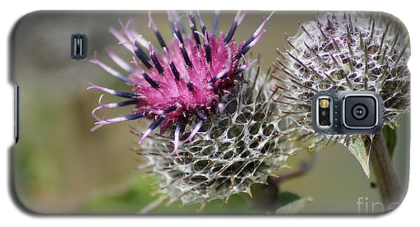 Carduus Asteraceae - Zierdistel Galaxy S5 Case