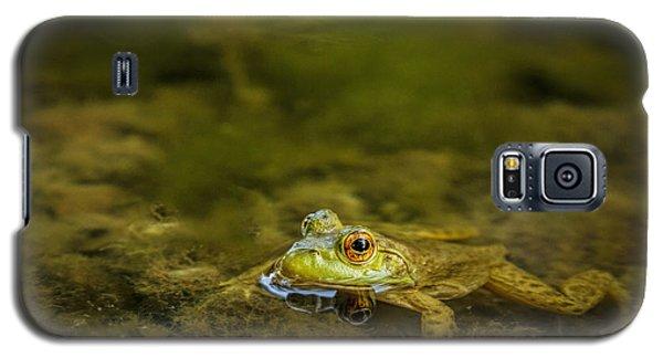 Carefully Scrutinized Galaxy S5 Case