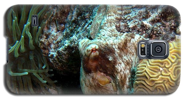 Caribbean Reef Octopus Next To Green Anemone Galaxy S5 Case by Amy McDaniel
