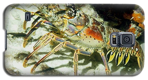 Caribbean Spiny Reef Lobster  Galaxy S5 Case by Amy McDaniel