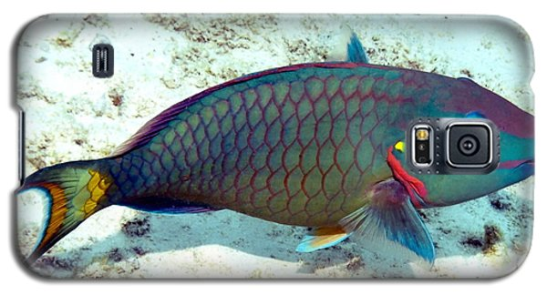 Galaxy S5 Case featuring the photograph Caribbean Stoplight Parrot Fish In Rainbow Colors by Amy McDaniel
