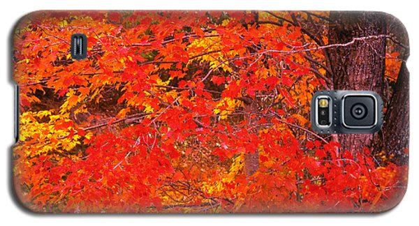 Galaxy S5 Case featuring the photograph Carolina Autumn by Marion Johnson