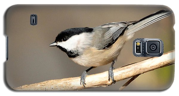 Galaxy S5 Case featuring the photograph Carolina Chickadee  by Kerri Farley