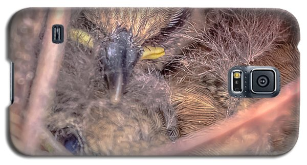 Galaxy S5 Case featuring the photograph Carolina Wren Nest by Rob Sellers